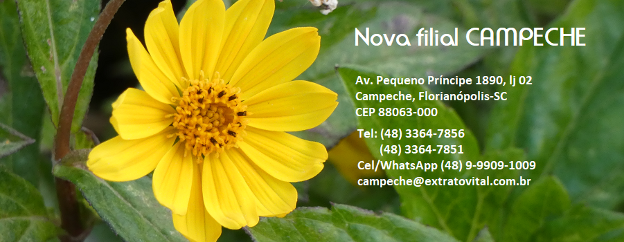 filial-campeche-4